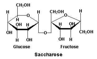 saccharose sucrose molecule