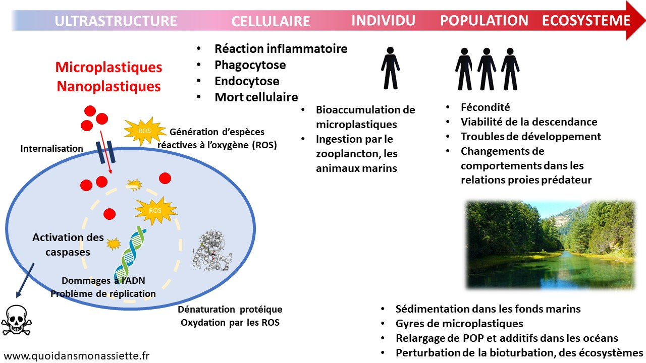 Microplastiques pollution environnement ecosysteme population