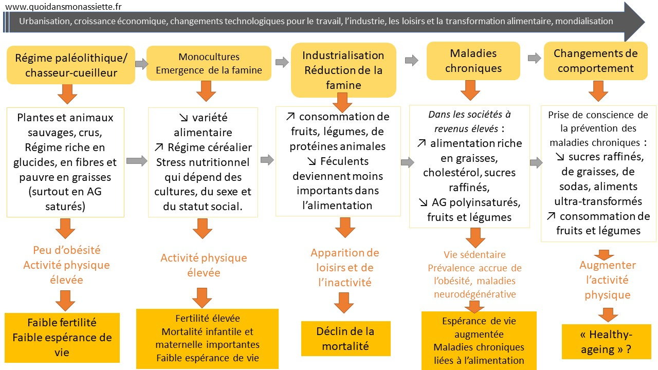 transition nutritionnelle shift nutritional schema
