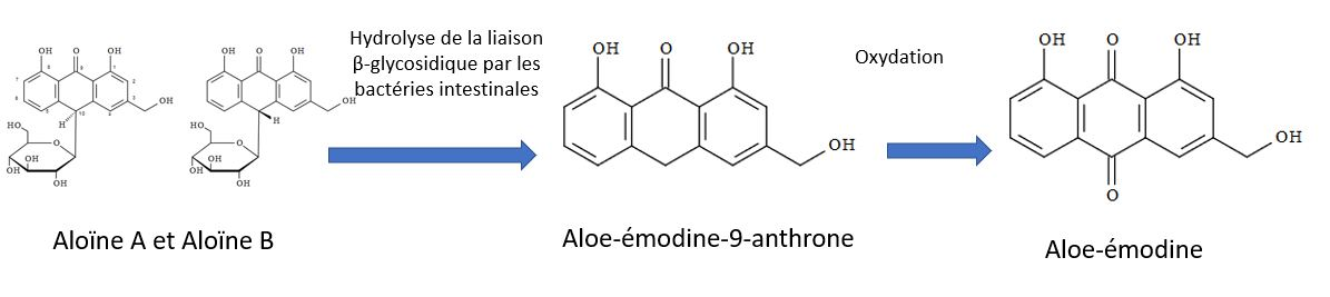 aloin anthraquinone metabolism mechanism of action emodin