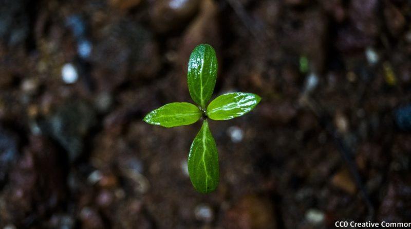 petite plante cellulose