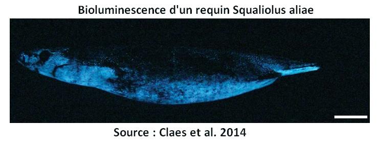 requin bioluminescence