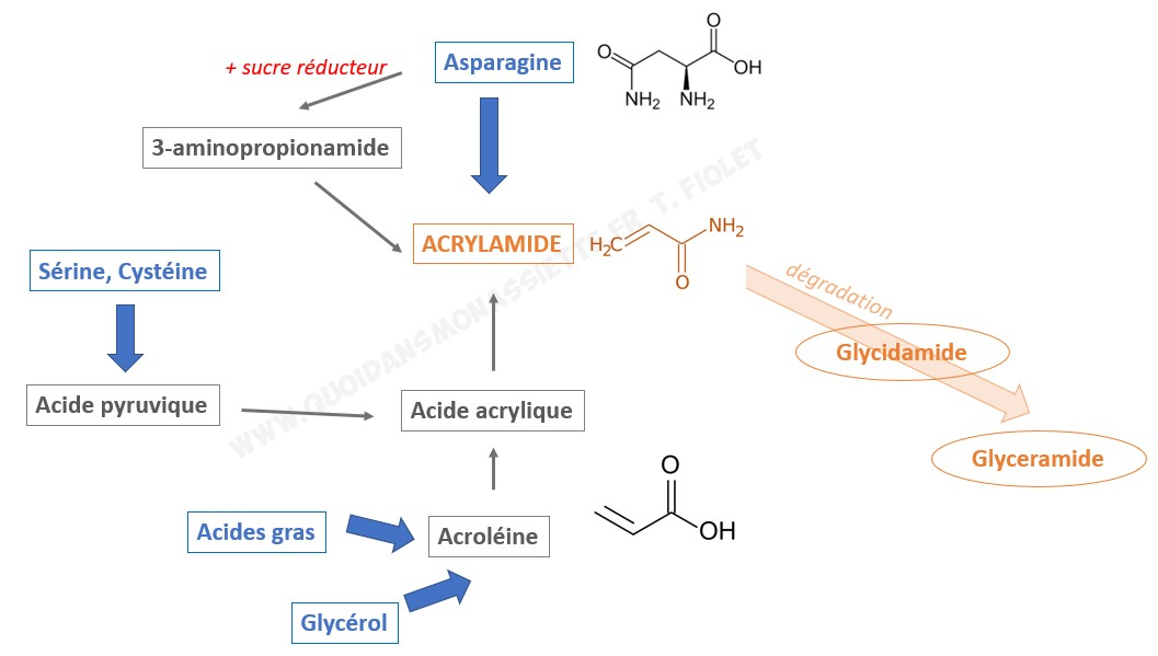 acrylamide pathway voie métabolique formation degradation
