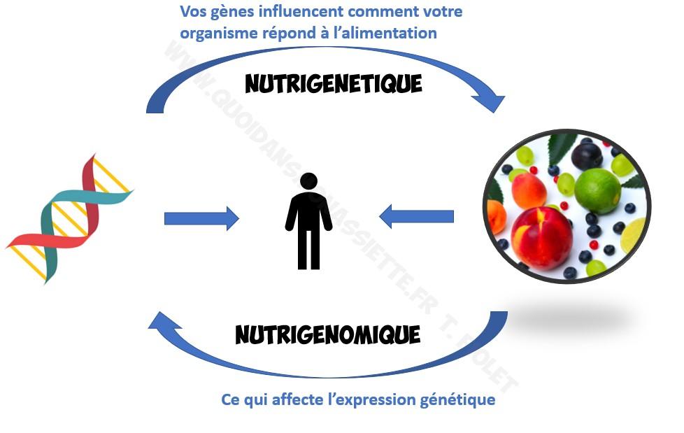 nutrigenomique nutrigenetique schema definition