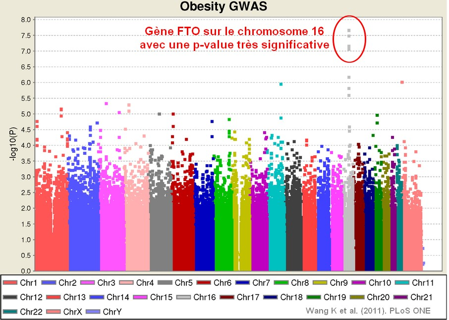 obesity GWAS gene FTO genetic snp