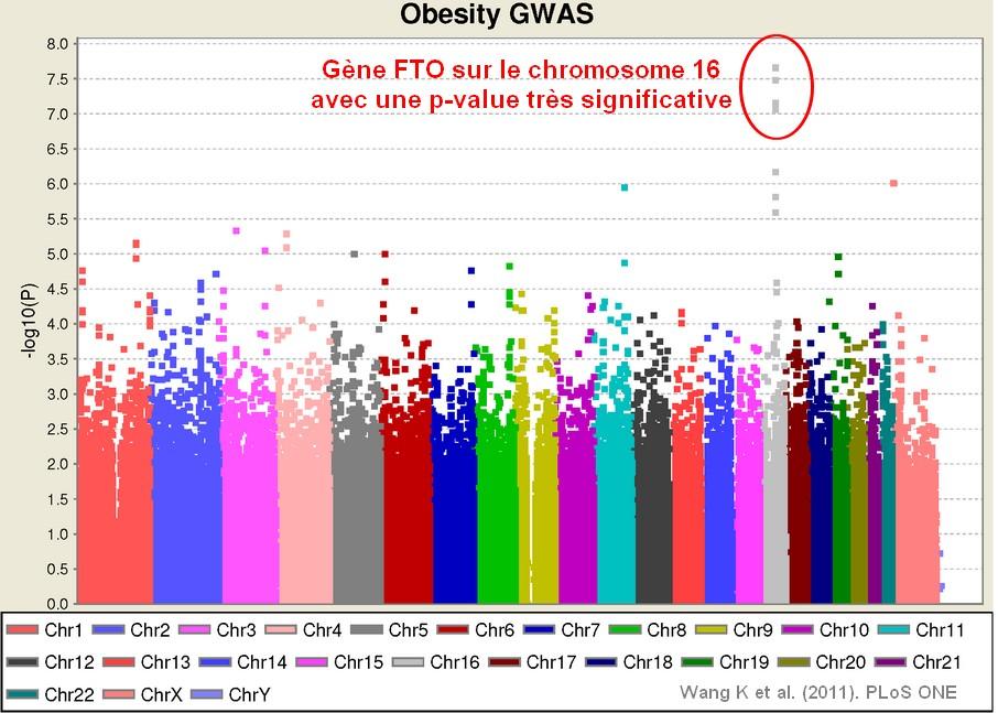 obesity GWAS gene FTO genetic snp