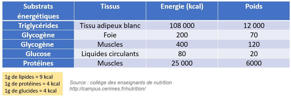 kcal calories substrats énergétiques lipides protéines glucides