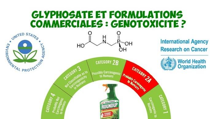 cancer glyphosate formulations genotixicite reduit