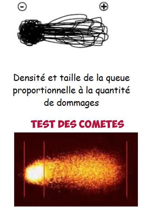 Test des comètes genotoxicite