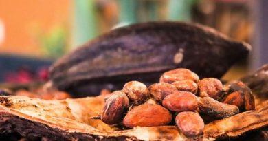 fèves de chocolat cacao 2