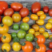 """C'est quoi """"manger varié et équilibré"""" ? Quelles relations entre diversité alimentaire et santé ?"""