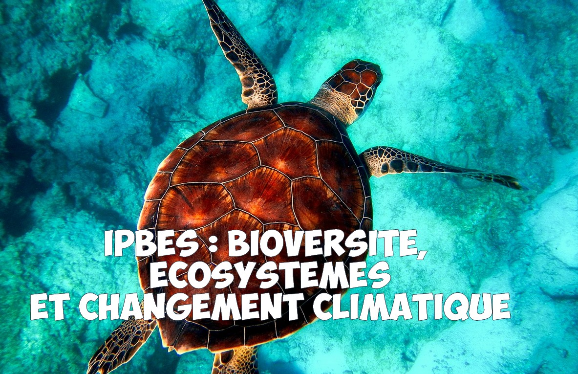 Résumé IPBES : Biodiversité, écosystèmes et changement climatique en quelques chiffres