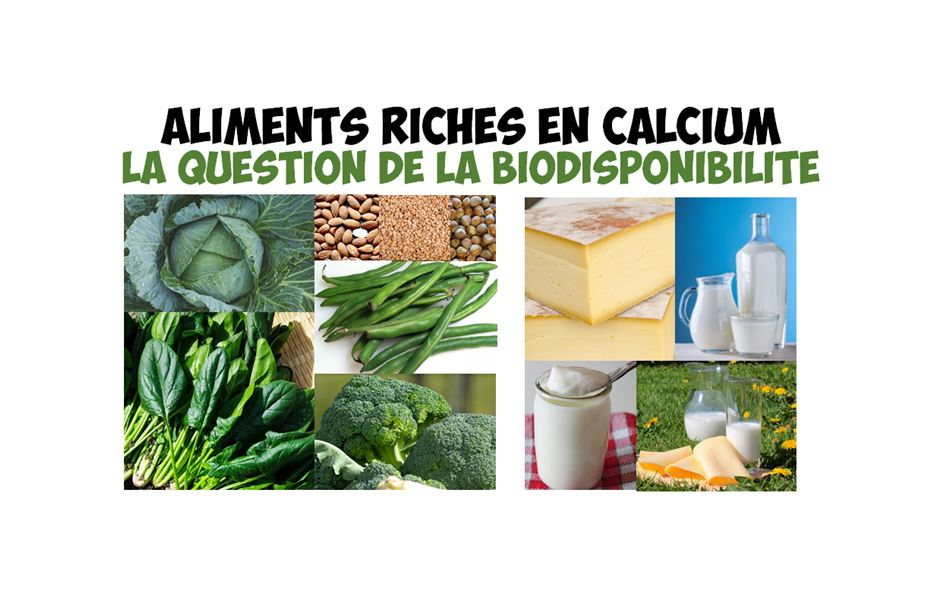 aliments riches en calcium sources image article
