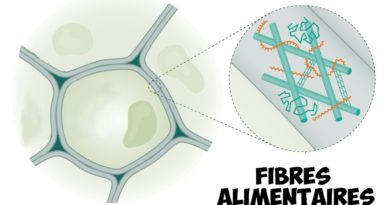 fibres alimentaires schema